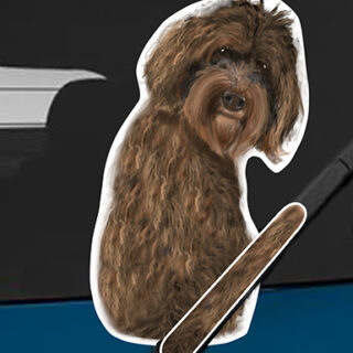 Labradoodle A dog rear window wagging wiper tail sticker